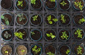 Nature plant pots